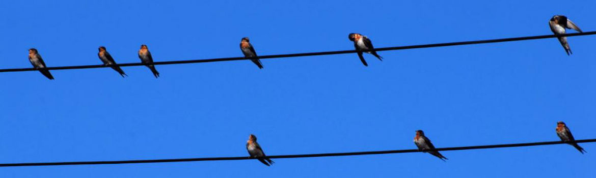 CORED_bird_on_wire